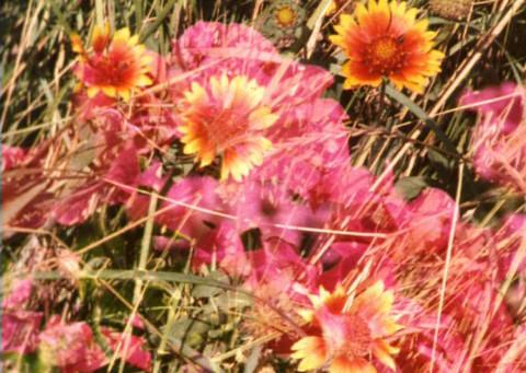 9.07.18-20.10.18 Sismographies, Zahia Rahmani, Rose Lowder, Simon Poëtte, et un hommage à l'éditeur Paul Otchakovsky-Laurens